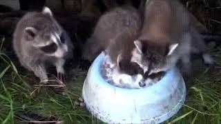 А на глубине вкуснее... Смешные короткие видео про животных и хозяев