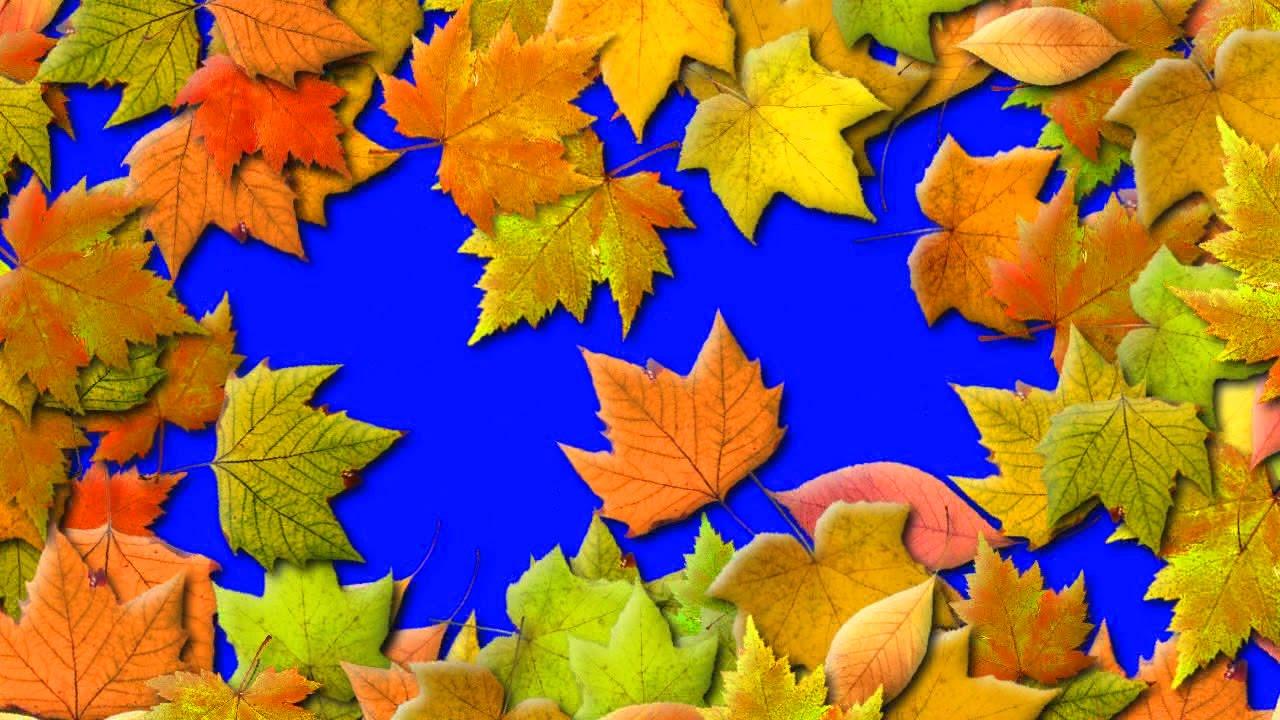 1 сентября осень фото
