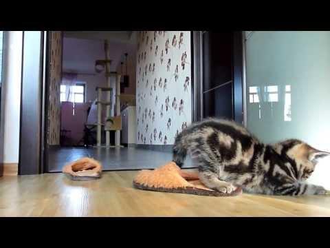 Смешное видео! Кот и елка!