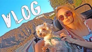 VLOG  Парк для собак, съемка В горах Лос-Анджелеса, ударилась головой
