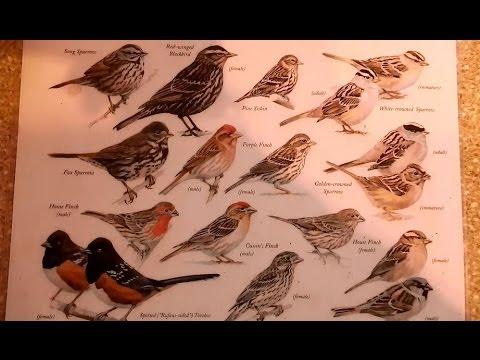 Bon Southern California Bird Identification Guide