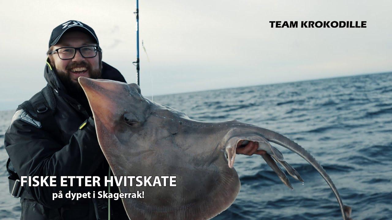 Film - Fiske etter hvitskate i Skagerrak