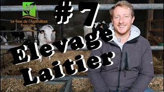 7 - C'est quoi un élevage laitier ?