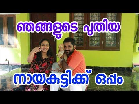 With our Honey (Labrador retriever) [ECO OWN MEDIA] Malayalam