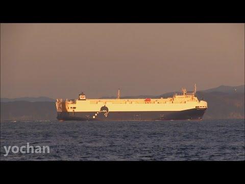 Vehicles Carrier / Ro-ro Ship: TRANS FUTURE 8 (TOYOFUJI SHIPPING - Toyota Group, IMO: 9477701)