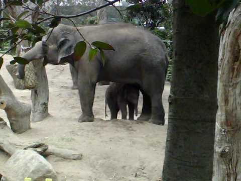 mali the elephant.mov