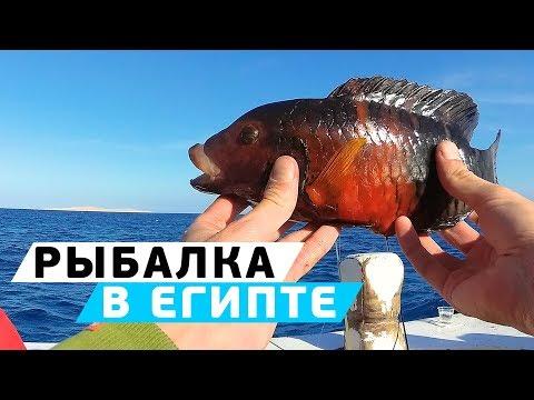 Морская рыбалка на Красном море! Египет, Хургада в декабре!