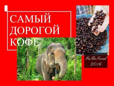 Самое дорогое в мире кофе