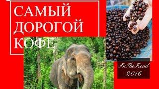 САМЫЙ ДОРОГОЙ КОФЕ ДЕЛАЮТ ИЗ ЭКСКРЕМЕНТОВ СЛОНА / COFFEE Black Ivory