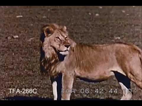 Camera Thrills in Wildest Africa (1962)