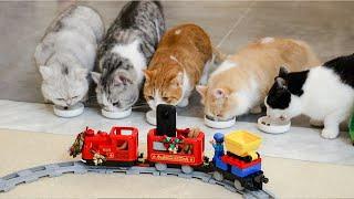 花花与三猫-太有钱了-2天建30米长火车-只为方便猫玩耍