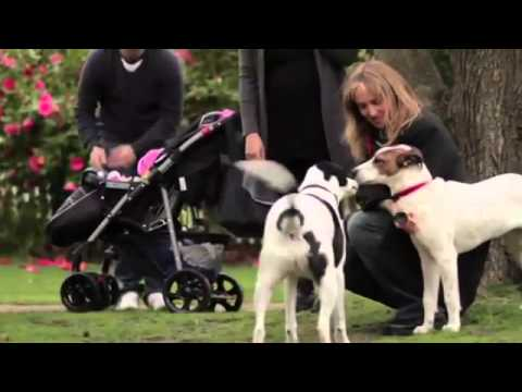 TV Series Premiere Part 3   Underdogs for the PEDIGREE® Adoption Drive