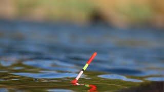ПОПЛАДЖИГ карась не устоит ловля карася в сильный ветер на поплавок
