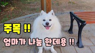 [스피츠] 강아지 모기퇴치 캠핑 모기퇴치 모스큐브 방향…