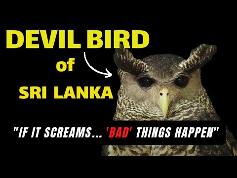 The Devil Bird Of Sri Lanka (2014)
