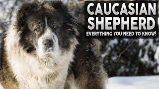CAUCASIAN SHEPHERD 101! Everything You Need To Know About The WOLF KILLER!