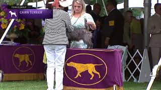 Cairn Terriers | Breed Judging 2021