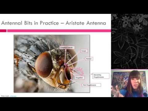 Insect External Morphology