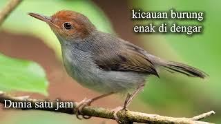 Suara Burung Kicauan Burung Panggilan Kicauan Burung