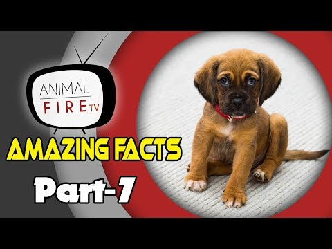 10 Amazing Facts about Dogs - Part 7 (Dog Facts)
