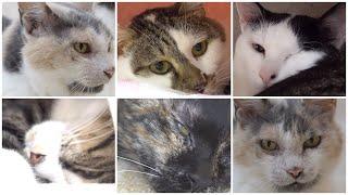 NyankuruTV Vol.6  にゃんくるTV【かわいい猫カフェ/保護猫】【Cute Cat Cafe】