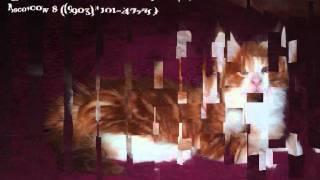 Котята Мейн кун в Москве
