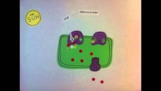 AP Biology: Photosynthesis