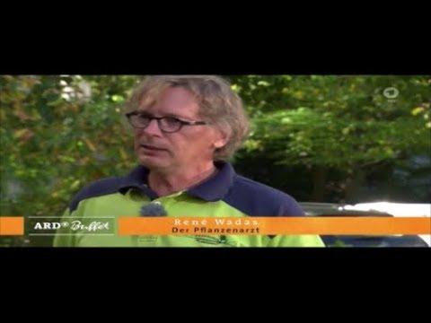 ARD-Buffet: Jetzt im Herbst: Rasenpflege nach dem heißen Sommer