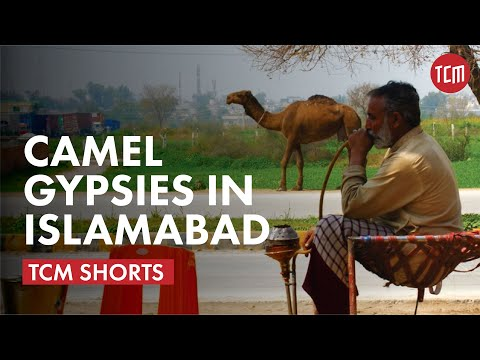 Meet the Camel Gypsies of Islamabad