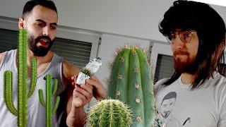 Kaktus VS Rücken 2.0 geht schief