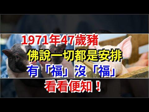 """1971年47歲豬,佛說一切都是安排,有""""福""""沒""""福"""",看看便知!,[星座運勢大全]"""