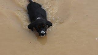 Как научить собачку заходить в воду и уверенно плавать(Некоторые собаки никогда не могут преодолеть свой страх к воде. Это обычно происходит из -за того, что их..., 2014-07-30T14:12:27.000Z)