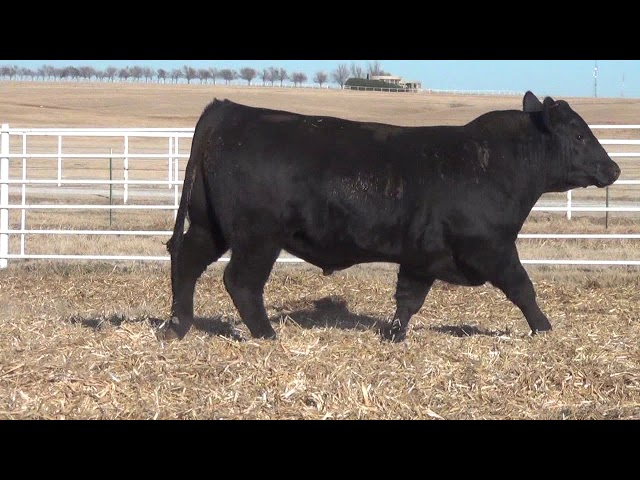 Express Ranches Lot 155