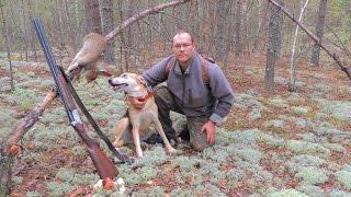 Охота с Русской пегой гончей на зайца