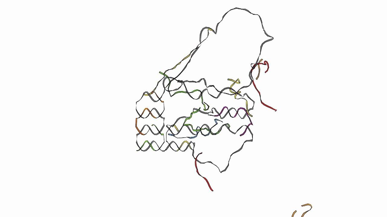 DNA origami folding animation - YouTube - photo#1