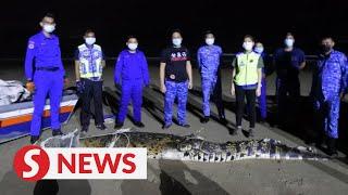 14.5 feet long croc caught in Pulau Gaya