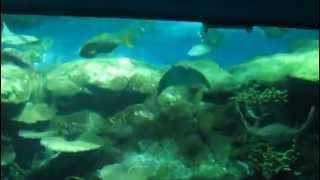 HongKong Ocean Park, The Grand Aquarium