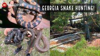 Springtime Snake Hunting in Georgia: Rattlesnakes, Kingsnakes, Mud Snake, and More!