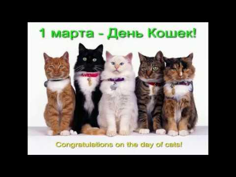 1 марта! День весны. День кошек