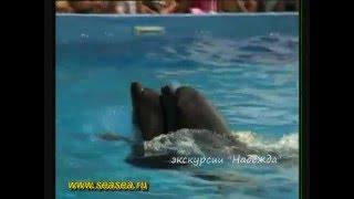 Gelendzhik   Геленджик  Отдых на море Дельфинарий(, 2011-02-17T03:10:21.000Z)