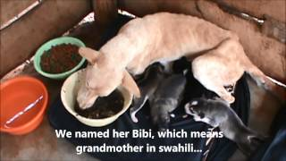 Rescuing a malnourished mother and her week old puppies.... Kilimanjaro Animal Rescue