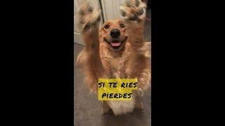 SI TE RIES PIERDES: EDICIÓN ESPECIAL - TODOS ESTRELLAS PARTE 2