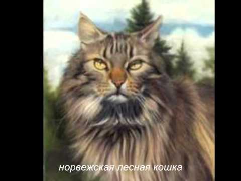 Как узнать породу кошки и определить ее правильно?