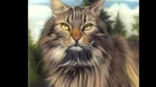 породы кошек и котов))