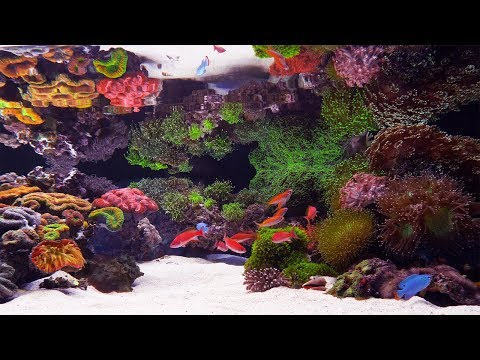 Rainbow Reef of VP Corals in Taipei, Taiwan Pt. 2
