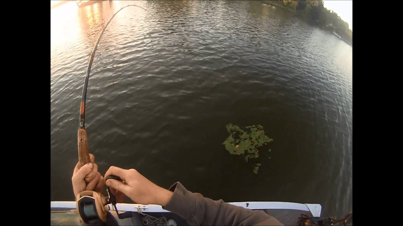Fall musky fishing on the fox chain of lakes 2013 youtube for Buy illinois fishing license online