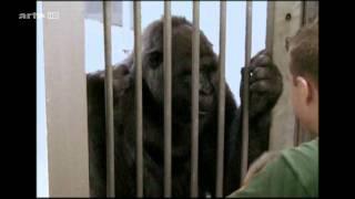 Tierisch lustig - Die Wissenschaft vom Lachen
