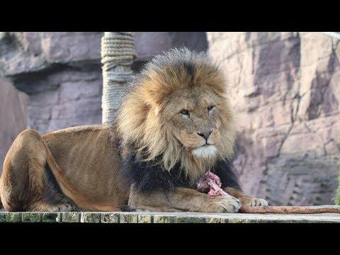 Colchester Zoo Trip - (April 2018)