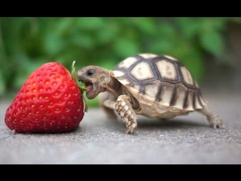 Thumbnail: Turtle / Tortoise - A Funny Turtle And Cute Turtle Videos Compilation || NEW HD