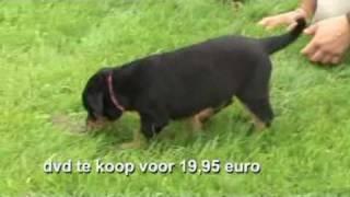 De Rottweiler: Puppy Test